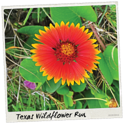 Austin 10K'r presents Texas Wildflower Run