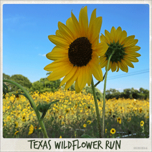 Austin 10K'r presents Texas Wildflower Run